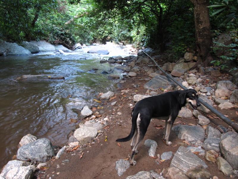 Wandeling met de hond